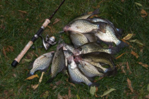 Fall Crappies