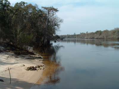 Suwannee River at Boat Dock 023