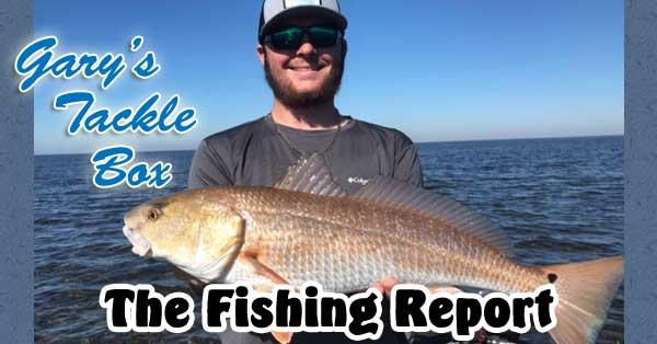 fishing report red fish